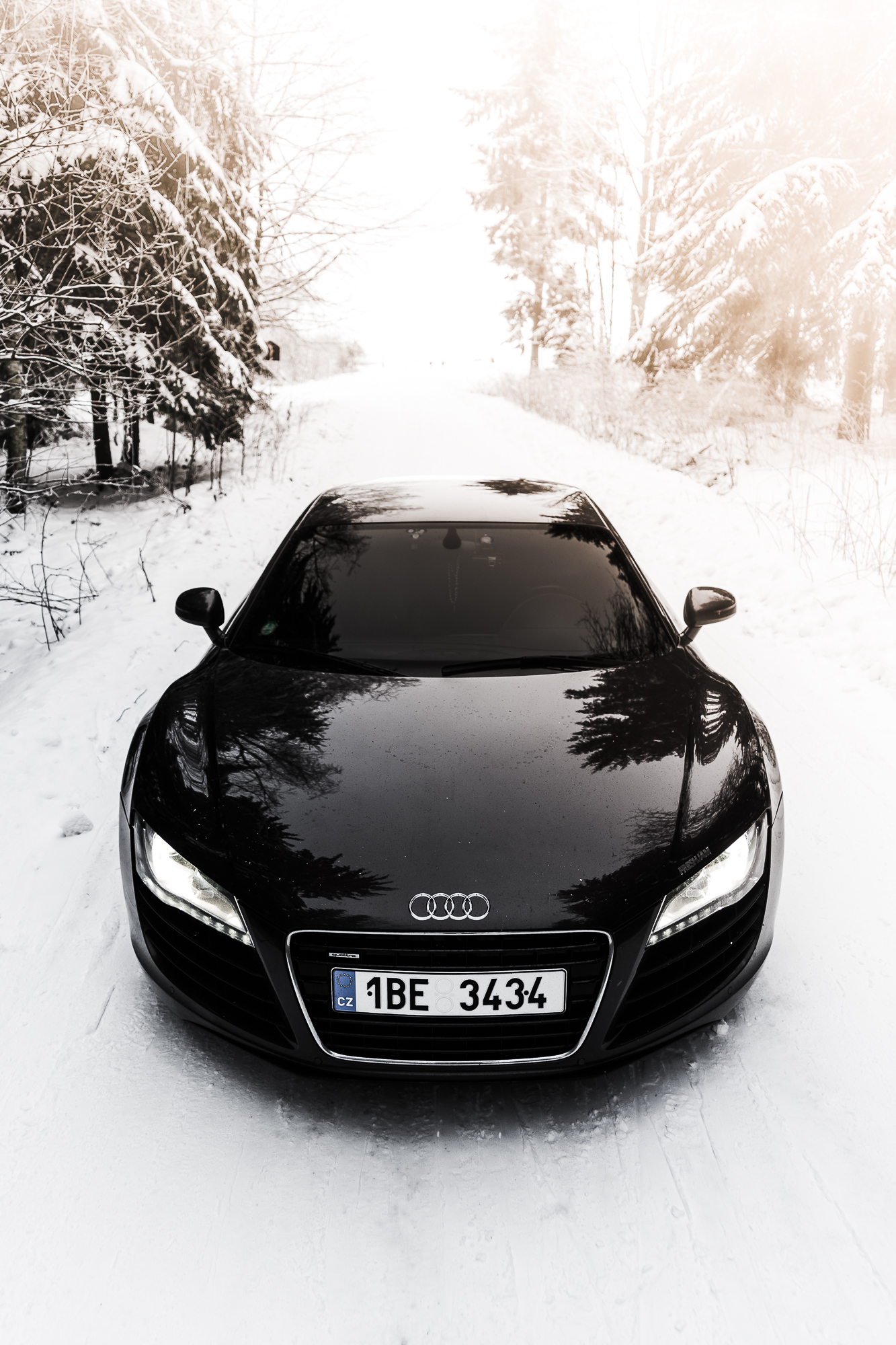 R8 Angry Look Winter Forest