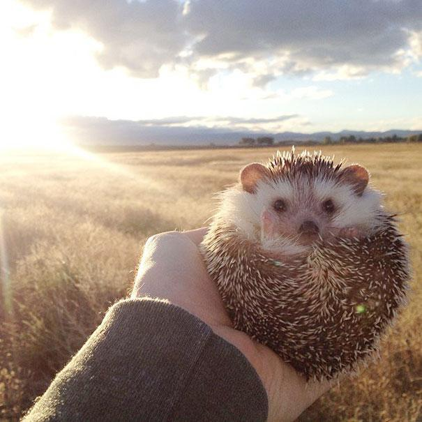 biddy-cute-hedgehog-adventures-1