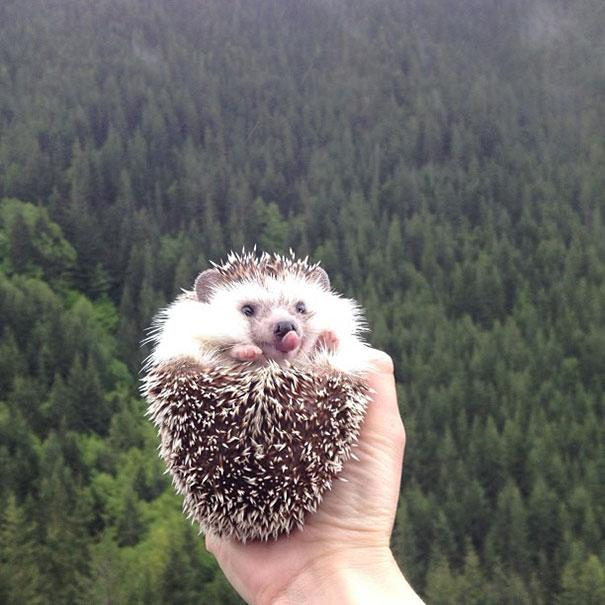biddy-cute-hedgehog-adventures-21