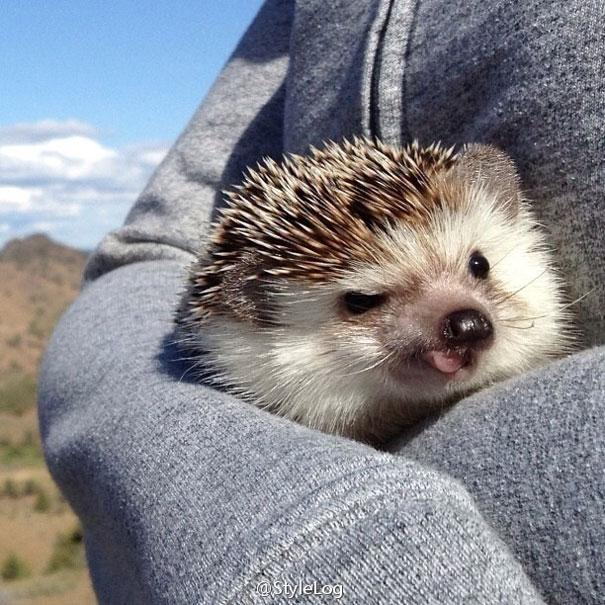 biddy-cute-hedgehog-adventures-29